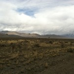 Sage Grouse heading for cover