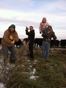 Feeding cows- always serious business