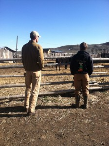 Observing the mother cows